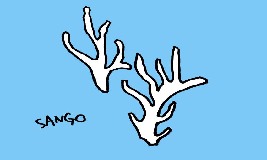 サンゴのイラスト