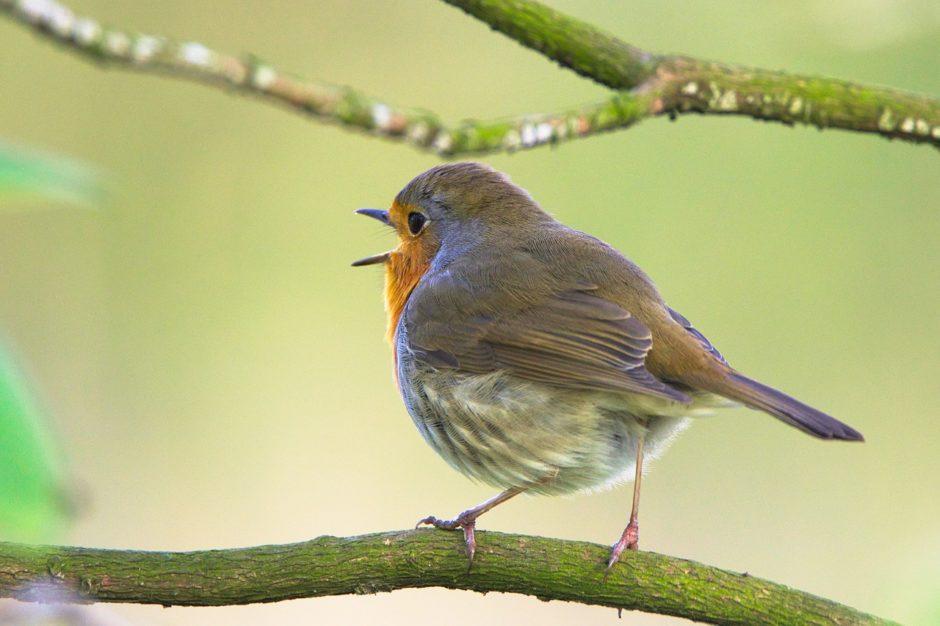 枝の上でさえずる小鳥