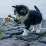 子猫が花を触っているところ