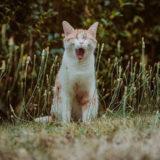 草むらで誰かを必死で呼んでる猫