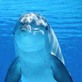 楽しそうな水中のイルカ