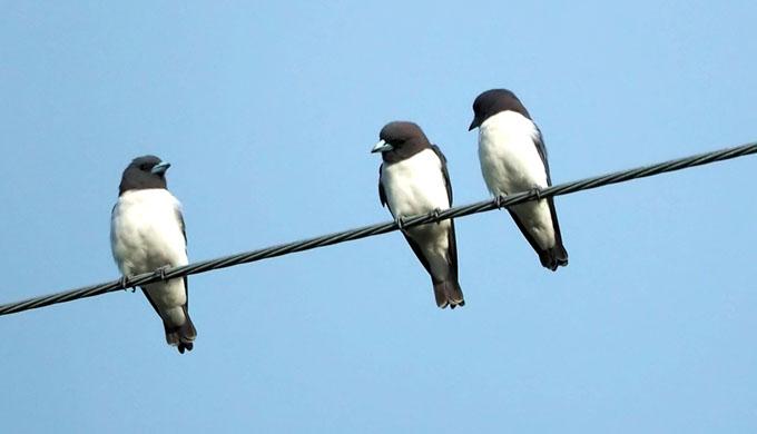 一羽だけちょっと離れてる小鳥たち